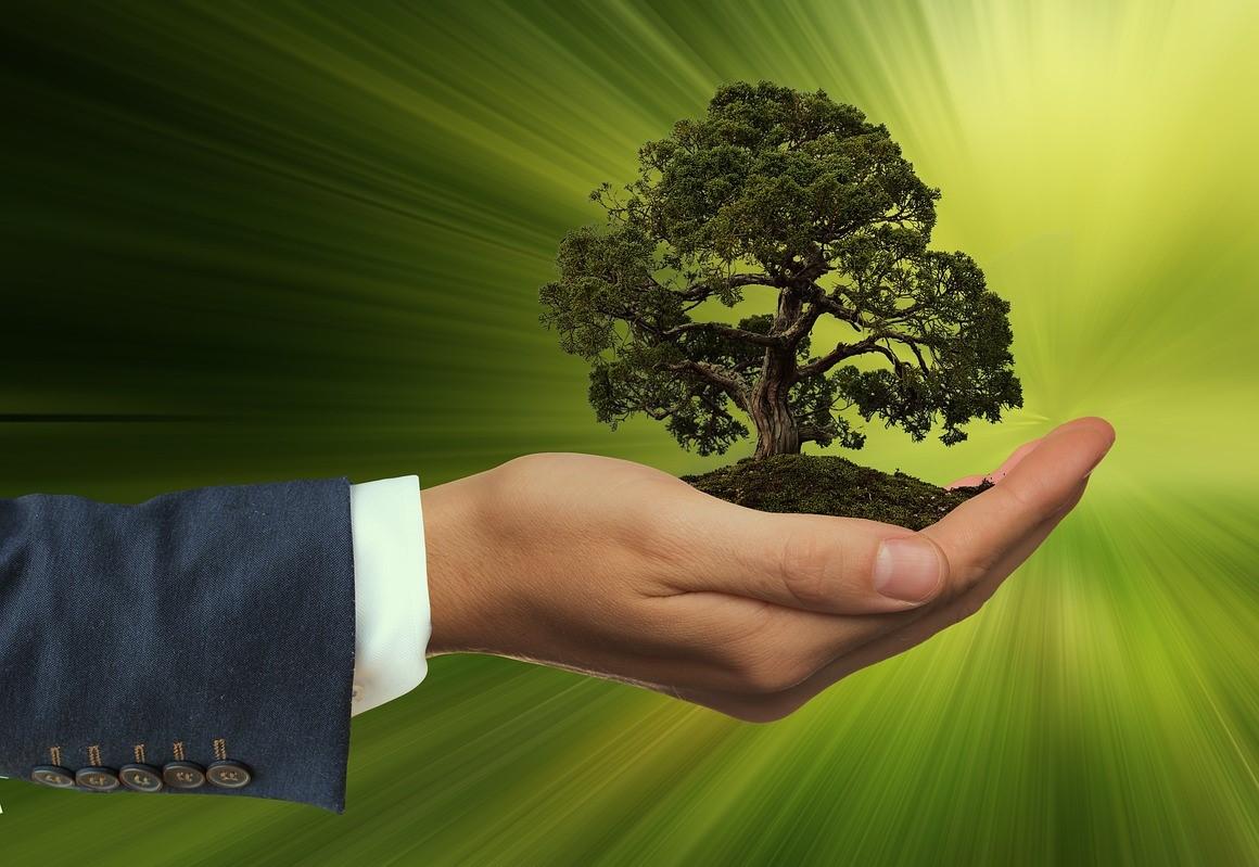 Der Einsatz Von Nachhaltigem Holz Im Alltag Wodewa