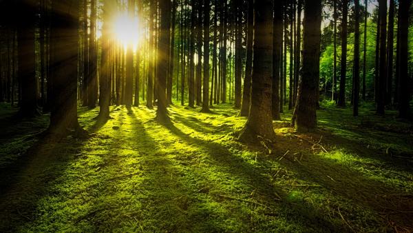 Der-Wald-in-Zahlen-10-Fakten-zu-den-deutschen-W-ldern-2