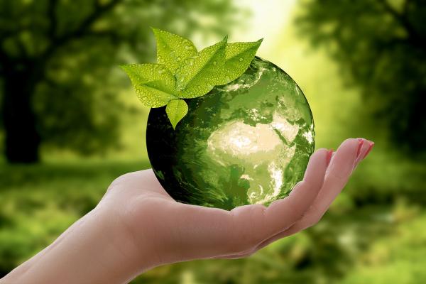 Nachhaltige-Holznutzung-was-sollten-Sie-beim-Holz-Recycling-beachten